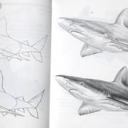 Menggambar_hiu_lumba-lumba_contoh