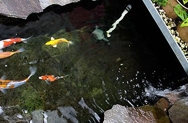 Filter-Kolam-Koi-2